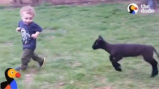 Download Boy And Lamb are BEST Friends at Farm Sanctuary | The Dodo Video
