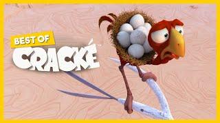 Download CRACKE - SUDDEN BREAK   Best Compilations   Cartoon for kids   by Squeeze Video