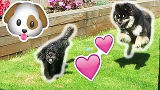 Download OUR DOGS MEET FOR THE FIRST TIME! Video