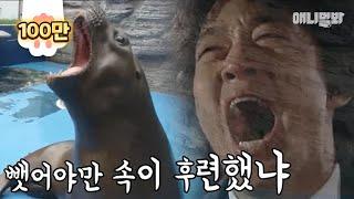 Download 식탐 폭발하면 '김래원' 빙의하는 물개 몽글이ㄷㄷ Video