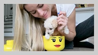 Download Putting doggy in things | iJustine Video