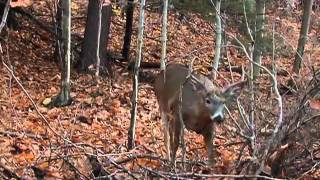 Download Where to Place Your Treestand for Deer Hunting Video