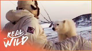 Download Polar Bear Cub Wants To Befriend Humans | Wild Things Shorts Video