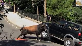 Download Stupid Humans vs Smart Wild Animals 7 Video