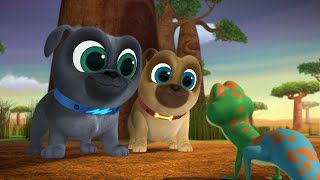 Download Lemur Play / How the Dog Park was Won Video
