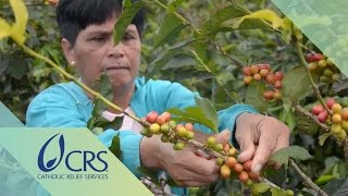 Download Agroforestry in Coffee Farming for a Sustainable Enterprise | CRS FARM Project Video