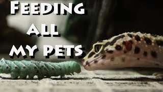 Download Feeding All My Pets! Video