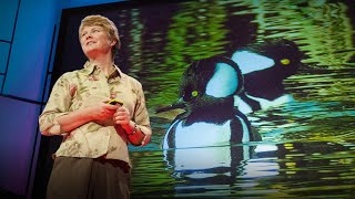 Download Janine Benyus: Biomimicry in action Video