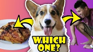 Download WILL MY DOG CHOOSE CHICKEN OVER ME? - Life After College: Ep. 506 Video