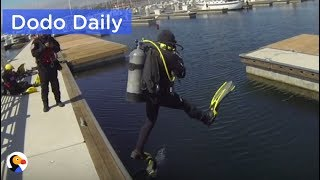 Download Cat Trapped Under Dock For 7 Days RESCUED | Best Animal Videos: The Dodo Daily Video
