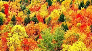 Download Peaceful Music, Relaxing Music, Instrumental Music, ″Autumn Leaves″ by Tim Janis Video