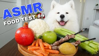 Download ASMR Dog Reviewing Different Types of Food #4 I MAYASMR Video