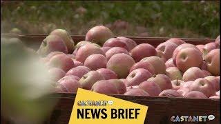 Download Fruit growers worried Video