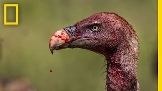 Download Vultures - Photographing the Antiheroes of Our Ecosystems | Exposure Video