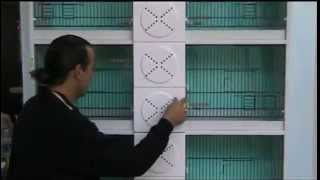 Download OTOMATİK SU ve YEMLİK SİSTEMLİ P.V.C. ÜRETİM KAFESİ & BIRD CAGE WITH AUTOMATIC SYSTEMS Video