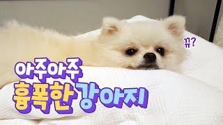 Download 아주아주 흉폭한 강아지 Video