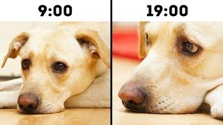 Download 10 Errores comunes que acortan la vida de tus mascotas Video