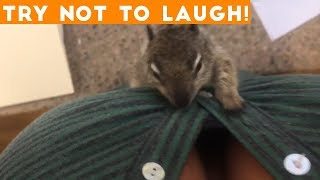 Download TOP 100 FUNNY ANIMALS of 2018 | Try Not To Laugh Challenge March / April | Funniest Pet Videos Video