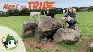 Download MEET ALL MY ANIMALS! Horses, Ponies, Donkeys, Cats, Dogs & a few others! THE WHOLE TRIBE! Video