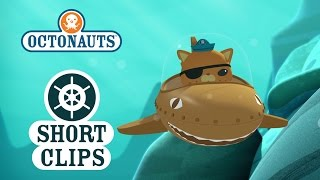 Download Octonauts: Kwazii Meets Mixed Up Whale Video
