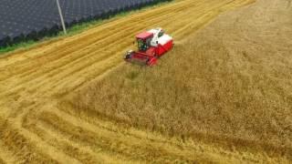 Download 2016 Yanmar AG1140R harvesting a wheat 얀마 범용 콤바인 밀 수확 Video