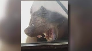 Download B.C. bear punched in the nose after encounter with family Video