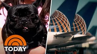 Download Dog's Death On United Flight Spurs New Questions And Growing Outrage | TODAY Video