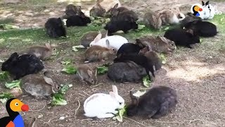 Download Abandoned Bunnies Dumped in Field Rescued by Woman in Las Vegas | The Dodo Video