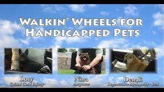 Download Walkin' Wheels Dog Wheelchair Movie Helps Handicapped Pets Video