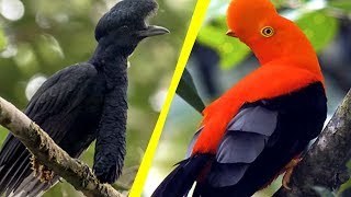 Download 5 Most Unique Exotic Birds In The World! Video