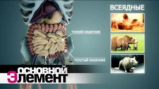 Download Вегетарианство | Основной элемент Video