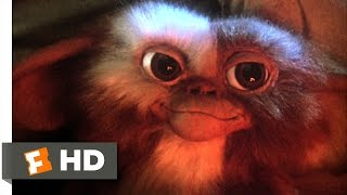 Download Gremlins (1/6) Movie CLIP - Billy Meets Gizmo (1984) HD Video