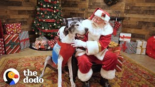 Download Shelter Dog Gets The Best Surprise For Christmas | The Dodo Video