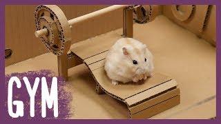 Download 햄스터 전용 헬스장 (Hamster's GYM) Video
