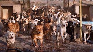Download Vafa Animal Shelter, Iran Video