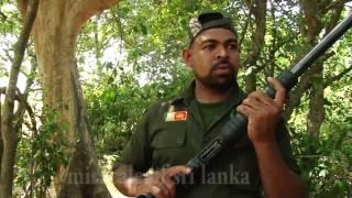 Download huge wild elephant capture Video