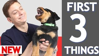 Download 3 MORE Things To Teach Your New Puppy! Video