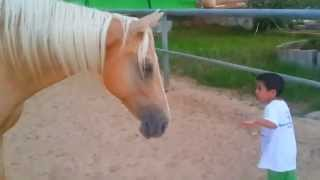 Download A young horse creates a sensitive and soft connection with a 4-year-old boy with Williams syndrome. Video