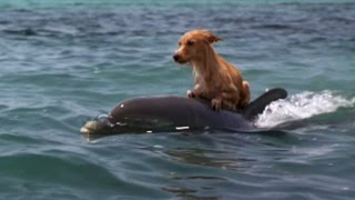 Download DOLPHIN & DOG SPECIAL FRIENDSHIP - Vangelis: Song Of The Seas Video