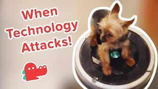 Download Dogs Vs. Appliances: Funniest Animal Videos, Clips & Compilation Video