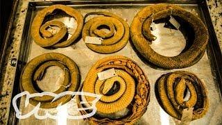 Download Snake Island (Full Length Documentary) Video