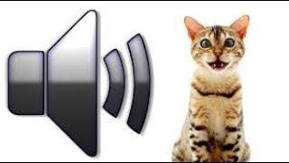 Download Топ 10 Мяуканье кошек которые бесят вашего кота или собаку - прикол над своим котом! Video