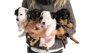 Download Reasons Why You Should Adopt A Shelter Pup Today Video