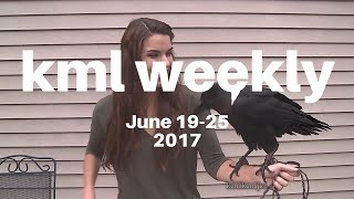 Download kml weekly compilation - #50 Video