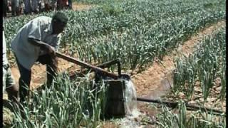 Download Part.1- Madagascar - Integrated rural Development : IFAD in Upper Mandrare Basin - PHBM Video