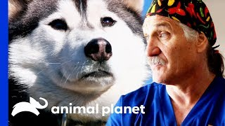 Download Vets Head into the Rockies to Examine and Treat 30 Rescue Dogs   Dr. Jeff: Rocky Mountain Vet Video