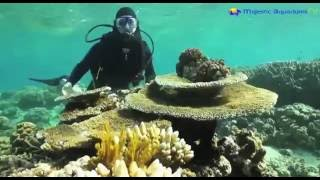 Download The Great Barrier Reef is NOT dying! Video