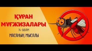 Download Құран мұғжизалары 14: Масаның мысалы ᴴᴰ Video