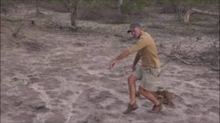 Download Safari Live : Byron and James do their best Nyala Bull Dance ( Funny ) Oct 29, 2016 Video