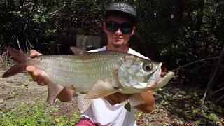 Download Most INTENSE Tarpon Fishing in Dirty Drainage Creeks! Video